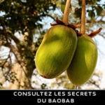 huiles de baobab