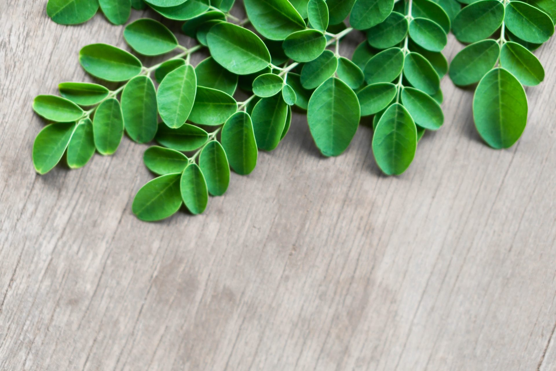 Closeup top view moringa leaves branch on wood background, herb and medical concept