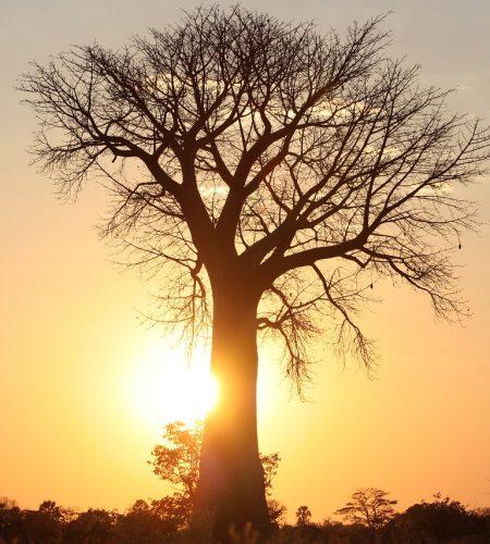 africa-3443656_1280.jpg